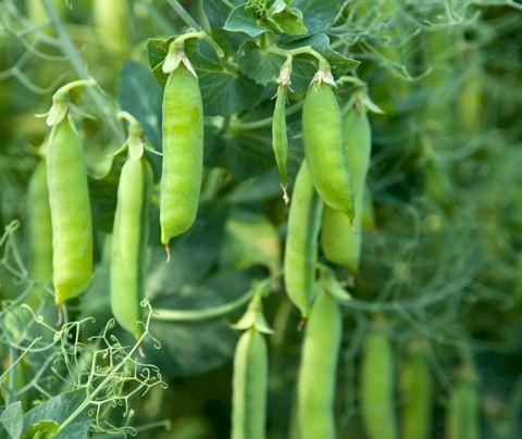 Bật mí các loại rau củ quả cung cấp protein cho người ăn chay